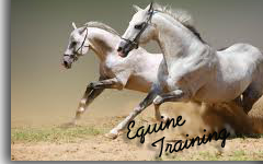 Equine Training